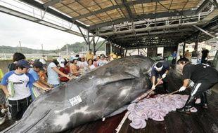 Des pêcheurs abattent une baleine de 10m de long sur le port de Wada dans la ville de Minami-Boso, à l'est de Tokyo, 25 juin 2008