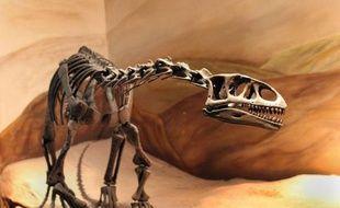 Des puces géantes, trois à quatre fois plus grosses que nos parasites modernes mais incapables de sauter, sévissaient déjà voici 165 millions d'années et suçaient probablement le sang de petits dinosaures qui abondaient à l'époque, rapportent mercredi des paléontologues.