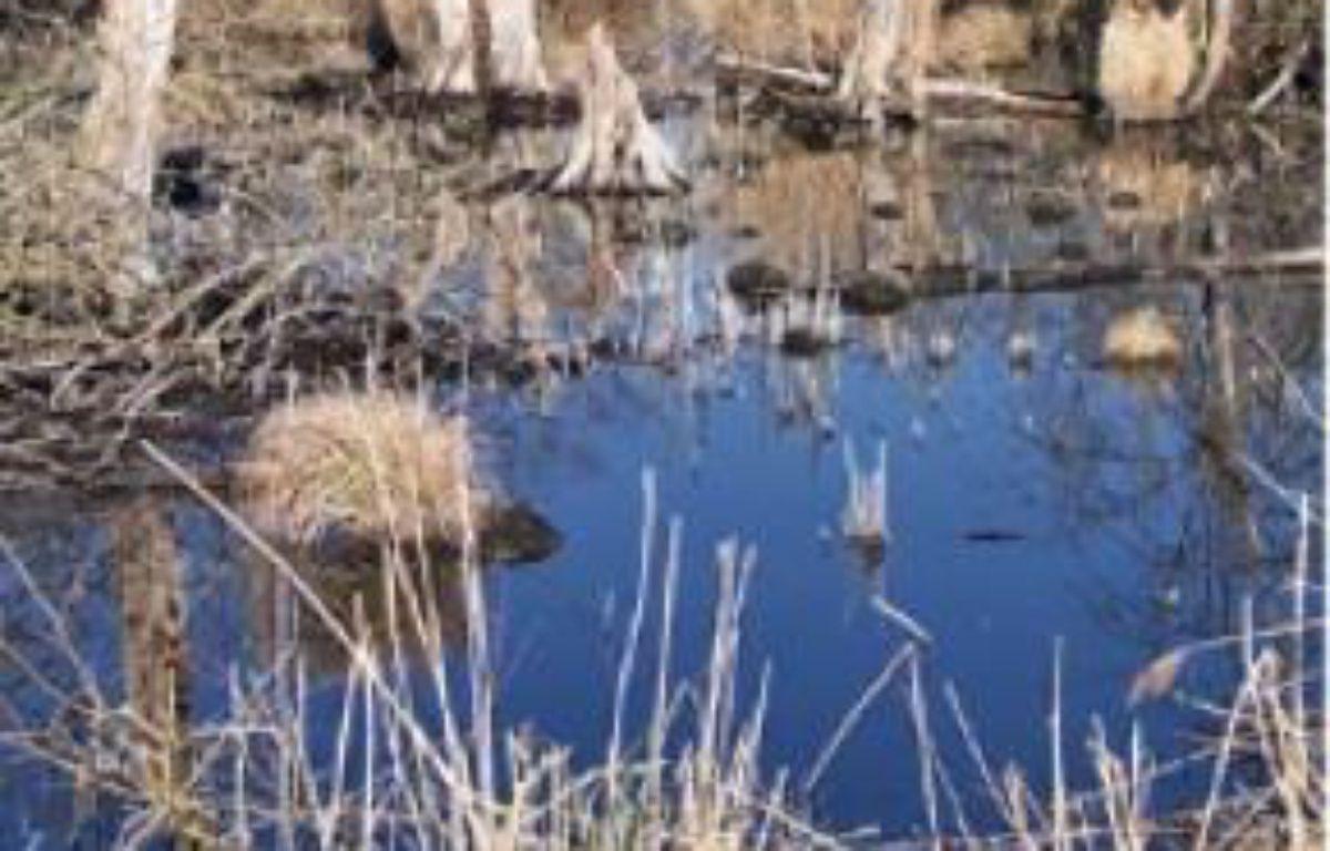 Le Marais de Larchant est préservé. –  ARNML