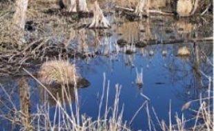 Le Marais de Larchant est préservé.