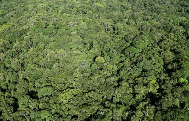 Vue aerienne de la foret amazonienne en Guyane.