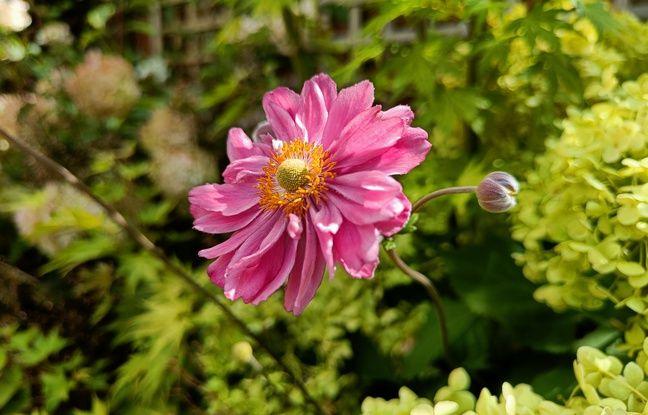 Η τεχνητή νοημοσύνη ανιχνεύει αυτόματα ένα λουλούδι ...