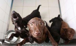 Illustration de chiens dans un chenil.
