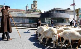 Manifestation contre la réintroduction des ours bruns, des loups et des vautours dans les Pyrénées, à Foix, le 28 juin 2014