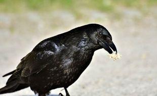 Un corbeau (illustration).