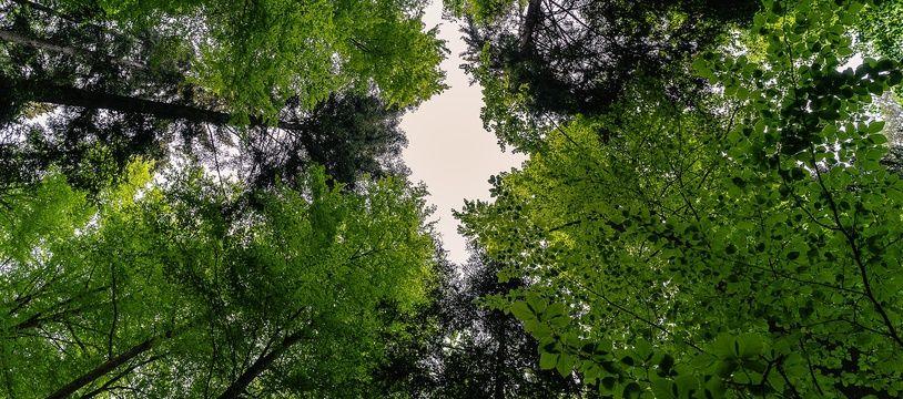 Le collectif Micro-Forêt de