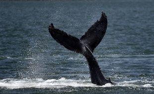 Image d'illustration d'une baleine en mer.
