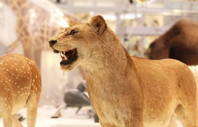 La grande galerie du 19° du muséum de Bordeaux a été entièrement repensée