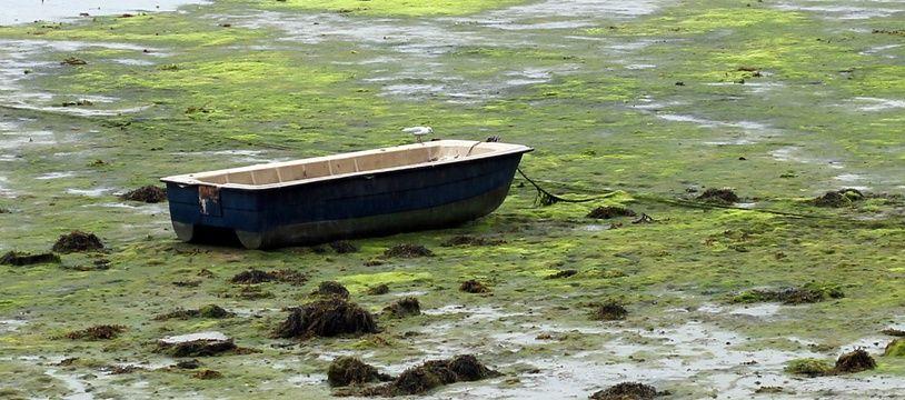 Des algues vertes ici sur les bords de Rance à Plouër-sur-Rance, en Ille-et-Vilaine, en août 2017.