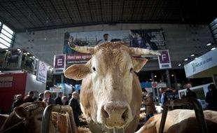 Cette vache n'est pas candidate à l'Elysée.