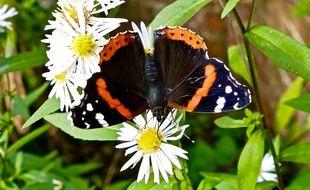 Une étude menée sur 27 ans observe de très fortes chutes de population d'insectes en Allemagne, mais très vraisemblablement aussi en Europe.
