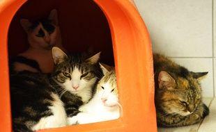 Des chats, à la SPA de Montpellier.