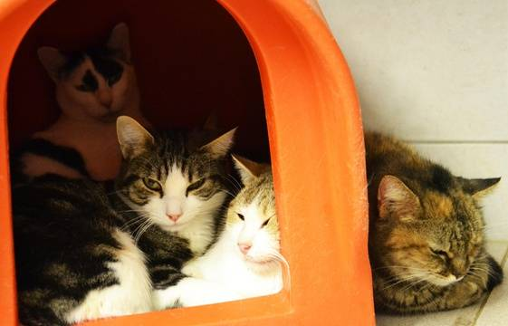 Montpellier Face A Une Surpopulation De Chats La Spa Lance Un Appel A L Adoption