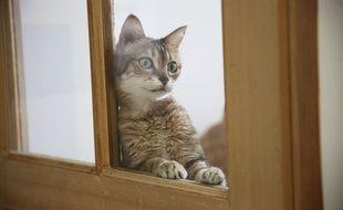Au bout du rouleau, ce chat compte les jours jusqu'au 11 mai, et ça fait longuet... (Illustration)