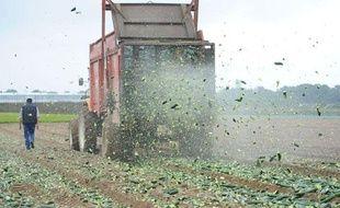Des maraîchers détruisent une partie de leur récolte de concombres invendus, le 6 juin 2011 à Carquefou.