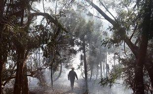 Un pompier dans la forêt de Maido, à la Réunion, le 1er novembre 2011.