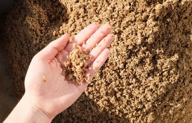 Les drêches, résidus du brassage de céréales, sont utilisés pour confectionner des biscuits.