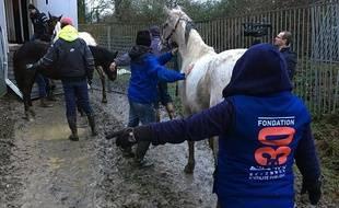 La fondation 30 Millions d'amis est intervenue pour sauver des dizaines de chevaux en Vendée.