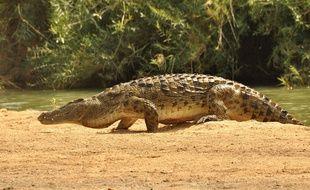 Cinq crocodiles sont arrivés au Parc Phoenix début juillet. Mais ils n'ont pas de nom !