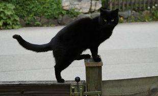 Perdu à Belfort, un chat retrouvé dans le Pas-de-Calais (Illustration)