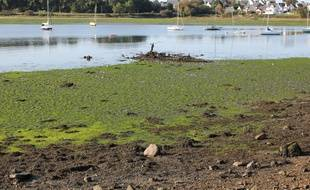 Illustration d'algues vertes échouées sur la côte bretonne. Ici en septembre 2020 à Lorient, dans le Morbihan.