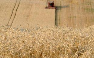 Un champ de blé à Trebons-sur-la-Grasse en juillet 2013