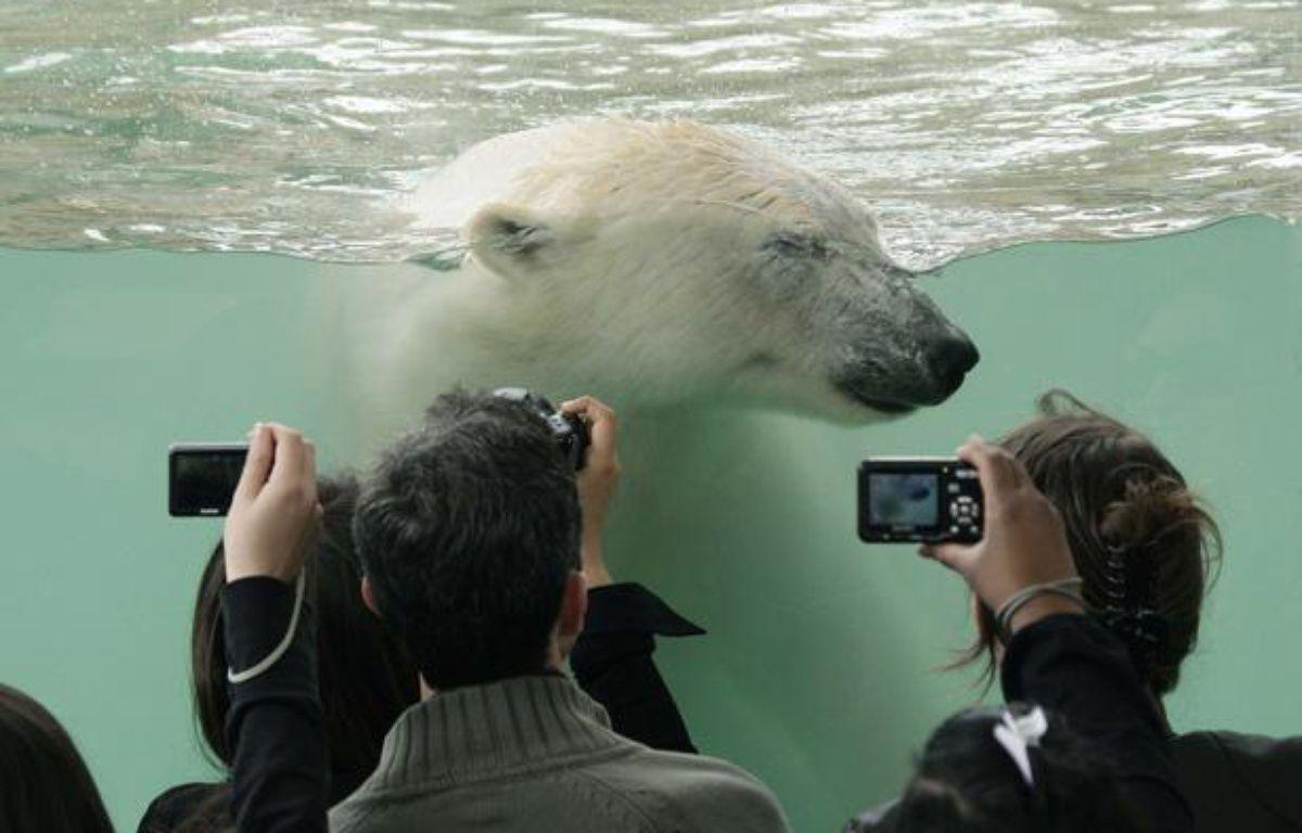 Un ours polaire dans un bassin de Marineland, à Antibes. – BEBERT BRUNO/SIPA