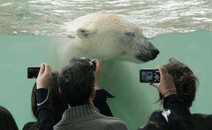 Un ours polaire dans un bassin de Marineland, à Antibes.