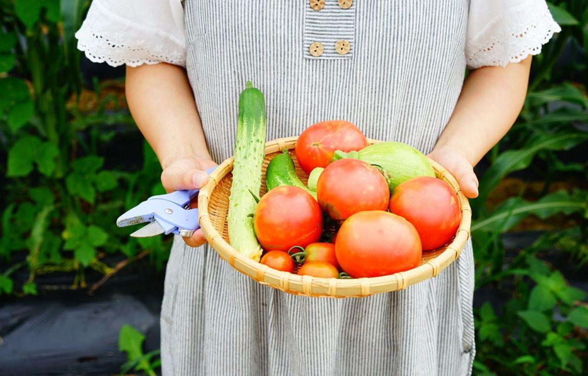 «Il faut cultiver notre jardin.» – sosari1086 / Pixabay