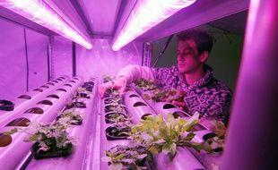 Le Rennais Fabien Persico dans un container de sa société Urbanfarm, rebaptisée La Boîte Végétale, qui propose des potagers urbains dans des containers.