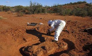 Des scientifiques sur le lieu de la découverte d'un dinosaure géant fossilisé.