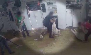 La vidéo de l'association de défense des animaux Peta