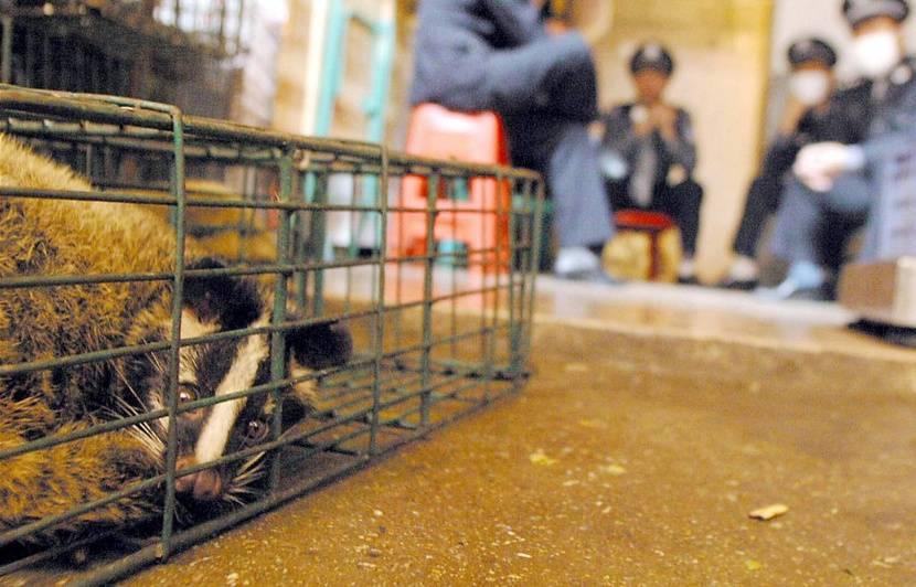 Coronavirus : Pourquoi le commerce d'animaux sauvages est-il pointé du doigt en Chine ?