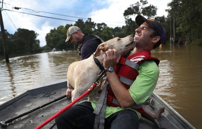 Mark Buchert de l'équipe de sauvetage des animaux de l'Etat de Louisiane a sauvé un chien des inondations qui ont frappé Baton-Rouge le 15 août