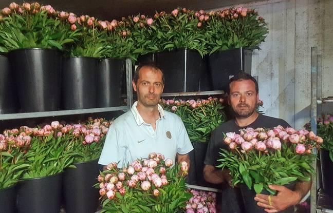 Fête des mères: A Montpellier, dans les coulisses du dernier producteur de fleurs coupées de l'Hérault