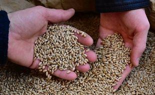 Les visiteurs attrapent des graines de blé lors de la journée d'ouverture du salon de l'agriculture