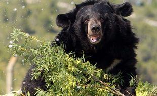 Un ours noir a semé la panique dans les rues d'Ottawa.
