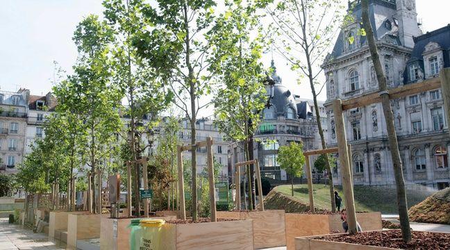paris ce samedi la p pini re municipale brade son surplus d arbustes et de plantes. Black Bedroom Furniture Sets. Home Design Ideas