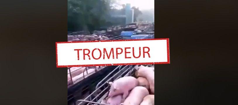 La vidéo virale montrant des porcs et des volatiles.