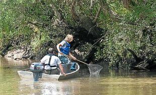 Environ 200 kg de poissons morts ont été ramassés dans la Leyre le 10 juillet après une pollution d'usine