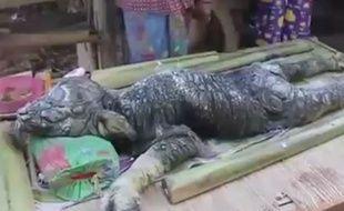 Une créature mi-buffle, mi-crocodile, découverte par des villageois en Thaïlande, en octobre 2015