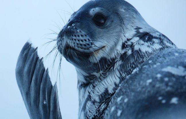 L'expo Antarctica est visible jusqu'au 31 décembre