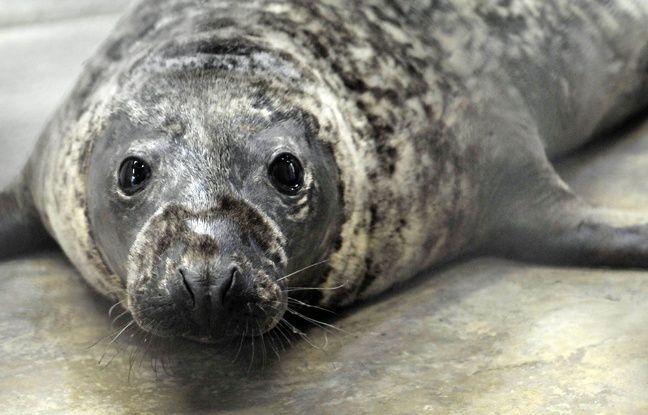 Finistère: Deux marins convoqués devant la justice dans l'affaire des phoques décapités