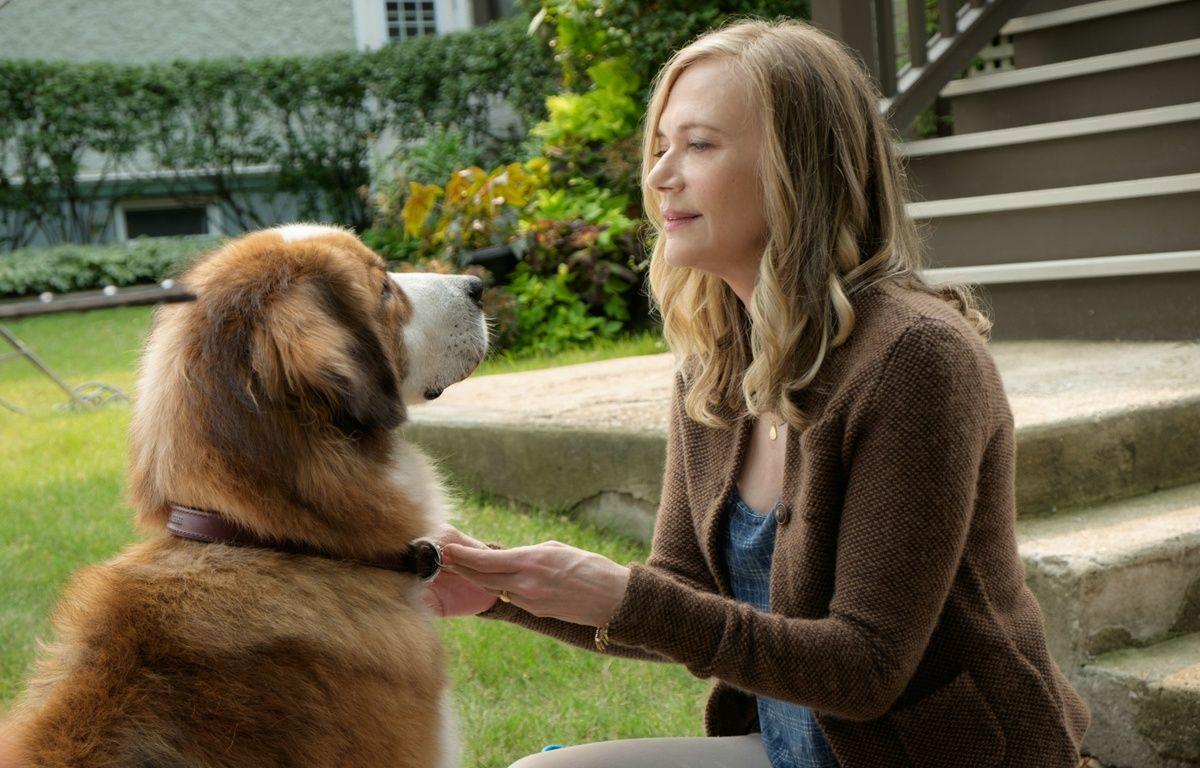 Mes vies de chien – CONSTANTIN VERLEIH/GMBH