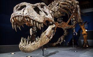 Tri,  le «T. rex» nous gratifie de son plus joli sourire.