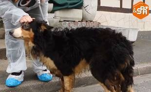 L'un des trois chiens secourus par la SPA en Seine-Maritime.