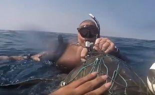 La tortue piégée en train d'être libérée par un plongeur.