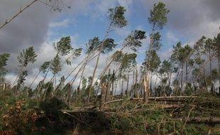 La forêt landaise après la tempête de janvier 2009.