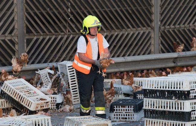 Les services de secours ont eu fort à faire pour battre le rappel de la volaille