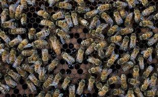 Des abeilles sur un essaim.